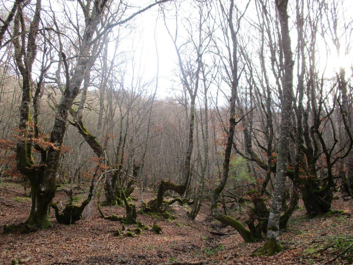 Bosques de Ruesga y Ventanilla